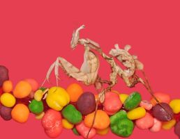 Roswel.And.The.Nerds.Rope by OctoberRainne