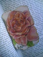 rose by kaloly