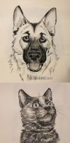 Charcoal Pet Portraits by Greykitty