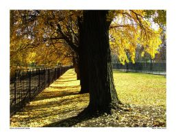 West Park Gold by yankeedog