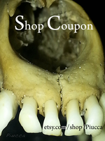 Shop Coupon - Taxidermy Items by Piucca