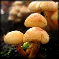 Tiny Mushrooms - II by MD-Arts