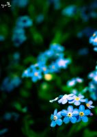 Blue Blue Flowers by DanManDu