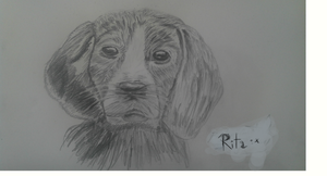 Rita, my dog by OanaBoni
