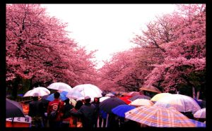 Blossom festival in Tokyo by ShanghaiBoo