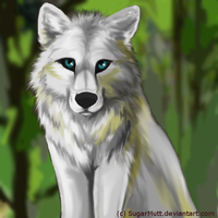 The Great White Wolf by SugarMutt
