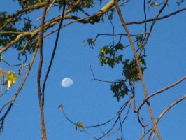 Moon through the Branches by Shallarinath