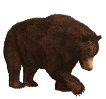 Brown Bear 03 PNG Stock by Roy3D