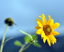 Flowers: Yellow 001 by letTheColorsRumble