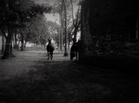 Horses in black by IsabelleAuditore