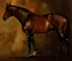 Race horse Catmandu by YOB