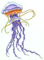 Jellyfish Purples by koshii
