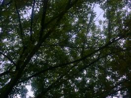 The Trees and Me - Garden - 2012-35 by Kay-March