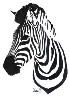 Zebra by LayeroftheBrick
