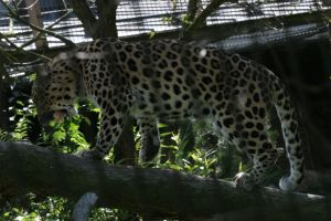 Leopard 3 by Arctictouch