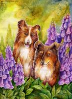 Sunshine Shelties by TrollGirl