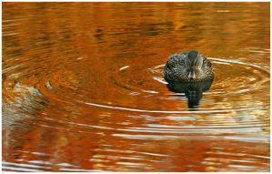 Ripple of Life by Delacorr