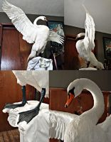 Swan work in progress by Meddling-With-Nature