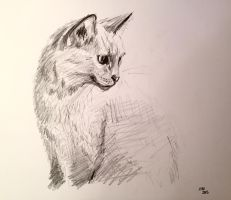 Kitty sketch by SquirrelGirl15