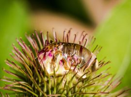raindrop pierced by a thistle... by clochartist-photo