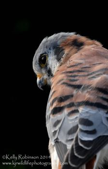 Kestral in the Dark by Shadow-and-Flame-86