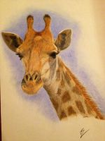 giraffe by 1997girl