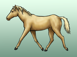 Palomino by Zifriel