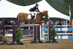 Chestnut Warmblood Grand Prix Jumpers by HorseStockPhotos