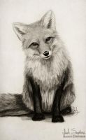 Fox Say What? by IsaiahStephens