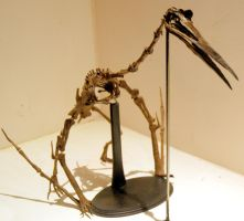 Quetzalcoatlus os1 by hannay1982