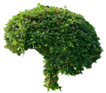 Small Green Bushy Tree PNG.. by Alz-Stock-and-Art