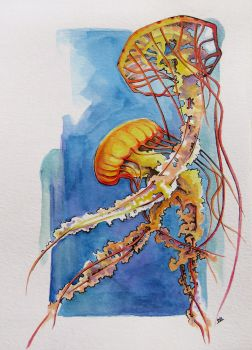Sea Nettles by StoneTheCrow87