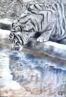 Tiger's Mirror - Drawing by Daphneven