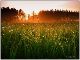 Morning has broken by irgendeine