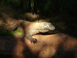 The Komodo Dragon by InkCreature96