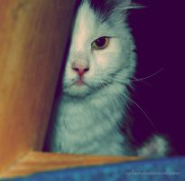 Mazsi, i see you by Sylwe