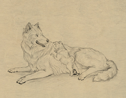 How to draw dogs and wolves by MonikaZagrobelna