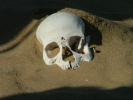 Skull in Namiba by Yuah