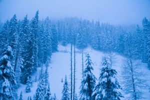Into the Cold Forest by Dreyco