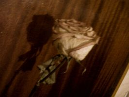 The rose fades after the love by LuanSouth