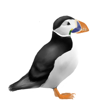 Puffin by Sophie315