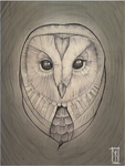 owl by Samuco