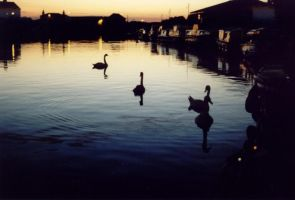 Birds and Boats. by GoldenGirls
