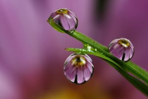 Dew Drop Refraction 15 by Alliec