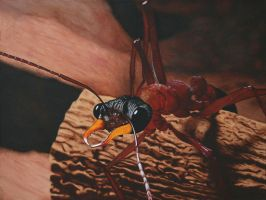 bulldog ant by CAK1776