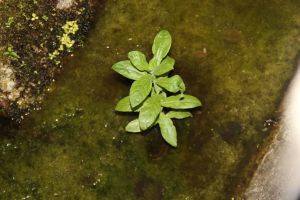 green plant by Leassomante
