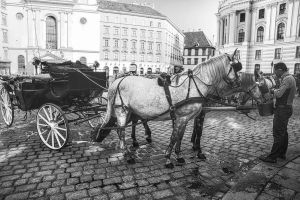 Horse in Vienna by Lad2-0