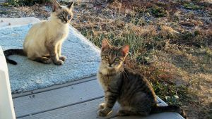 Porch Kittens by Frankief