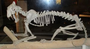 Hoplophoeneus Skeleton by LEXLOTHOR