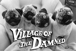 village of the damned - for dogs by Brandtk